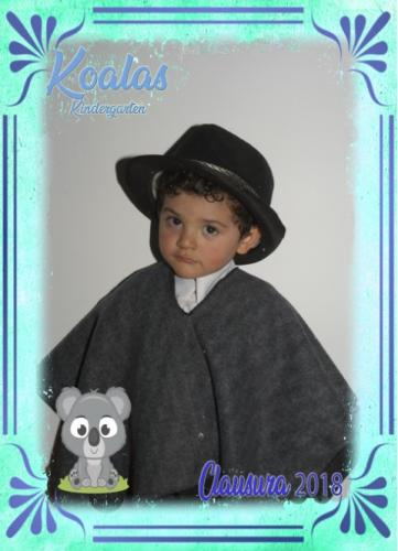koalas 18